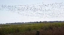 Migratory Bird Programs (video)