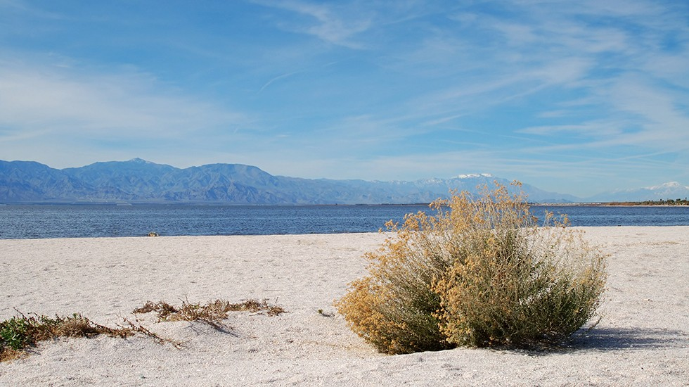 Environment Program: Solving the Salton Sea crisis