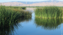 Incentives Prove Vital to Waterbird Habitats